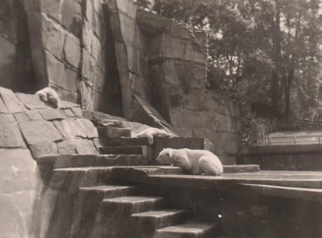 Wuppertaler Eisbären
