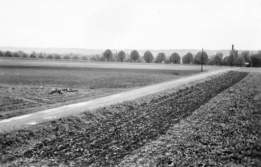 Feld in Beuel
