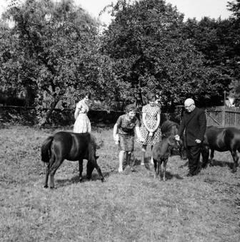 Ponys füttern