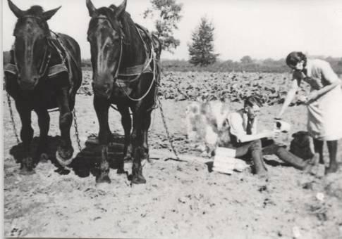 Arbeit in der Landwirtschaft