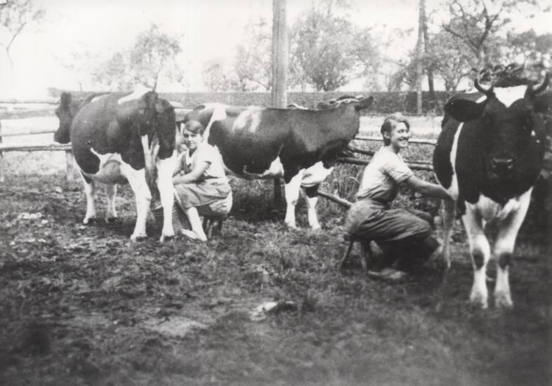 Acker, Ackerwagen, arbeit, Hocker, Kühe, Landwirtschaft, melken, Milch