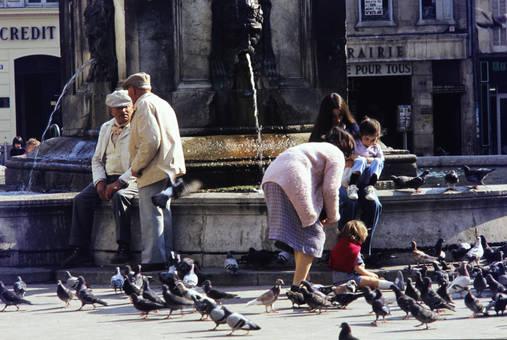 Tauben am Brunnen