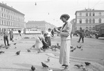 Taubenfütterung