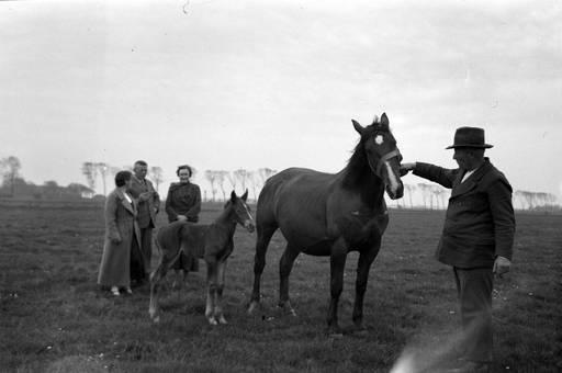 Bei den Pferden