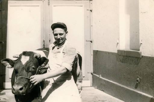 Mann und Kuh
