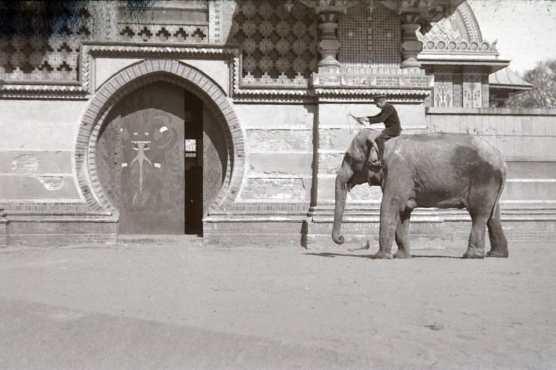 Elefant, elefantenhaus, Tierpfleger, Zoologischer Garten Berlin