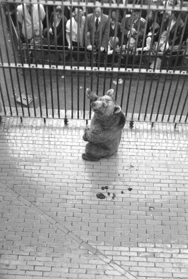 Bär, Bärengehege, Zoologischer Garten Berlin