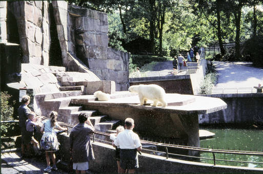 Eisbär in der Sonne