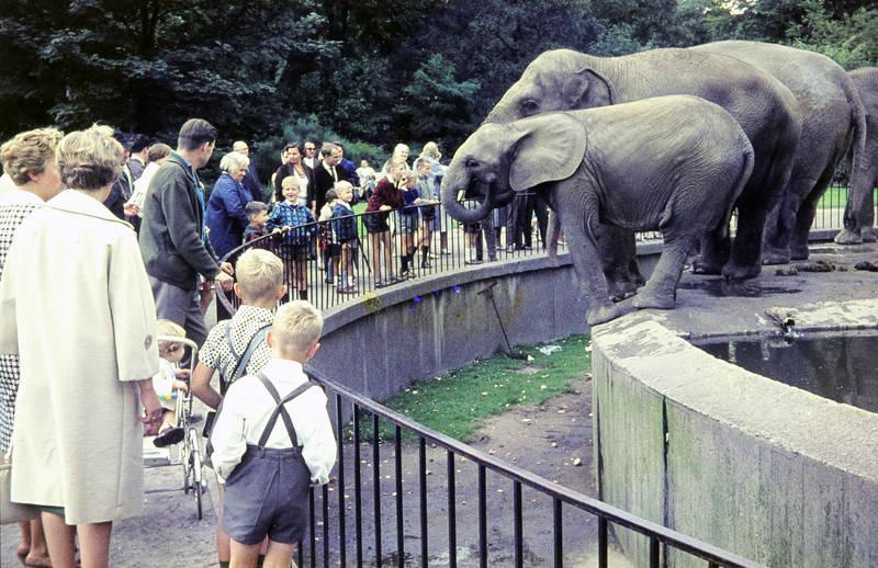 ausflug, Duisburg, Duisburger Zoo, Elefanten, familie, gehege, Zoo, Zoobesuch