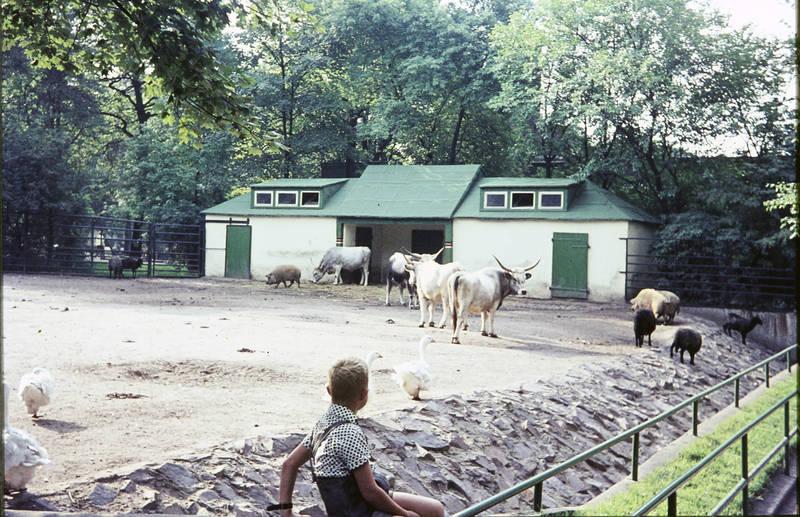 ausflug, Bulle, Duisburg, gehege, Kindheit, Schwein, Tiergehege, ziele, Zoo, Zoobesuch