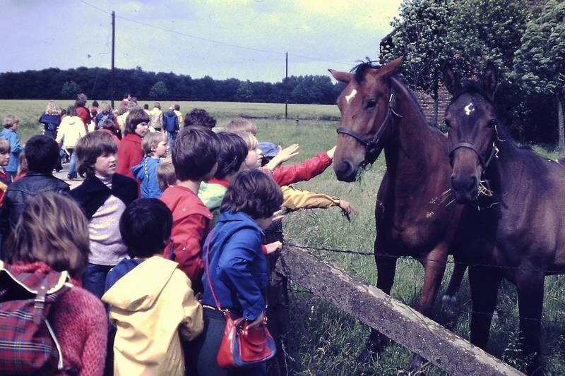 Kinderwandertag, Kindheit, Pferd, Pferdekoppel, streicheln, zaun