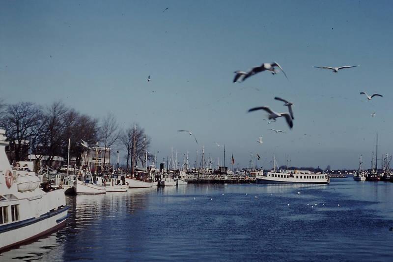 boote, Hafen, heiligenhafen, möwe, schiffe