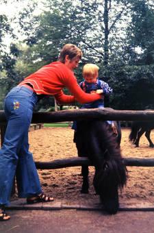Ein Pony zum Sitzen