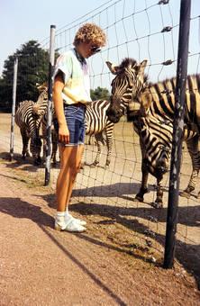 Hallo Zebras!