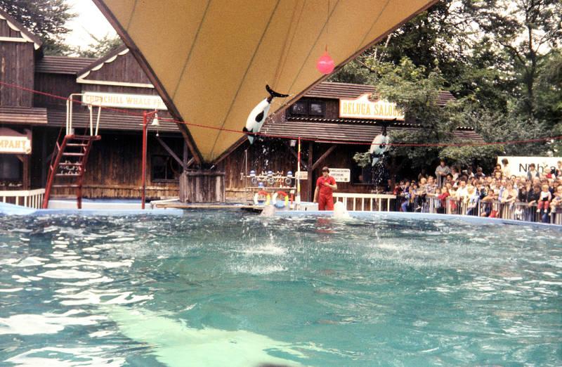 Delfin, Delfinshow, publikum, wasser, Zoo, Zuschauer