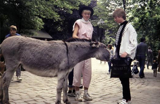Esel und Mensch