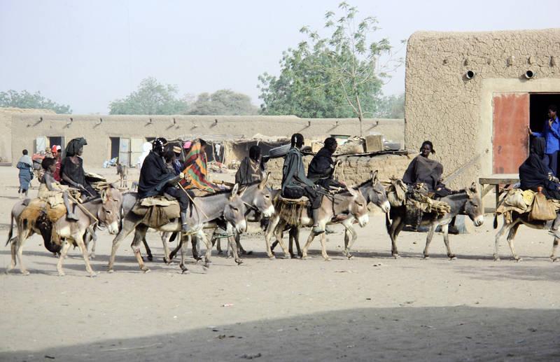 Esel, Maultier, Niger, reiten, Reiter