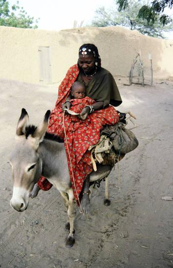 Esel, kind, Mutter, reiten, Reiter