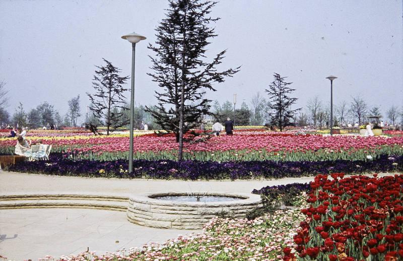 Blume, Blumenbeet, Bundesgartenschau, bunt, Dortmund, westfalenpark