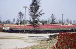 Bunte Blumenfelder