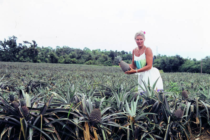 Ananas, Ananasfeld, Guadalupe, mode, natur