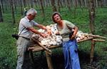 Pilze sammeln in Kamerun