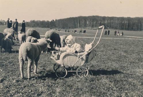 Schafswiese