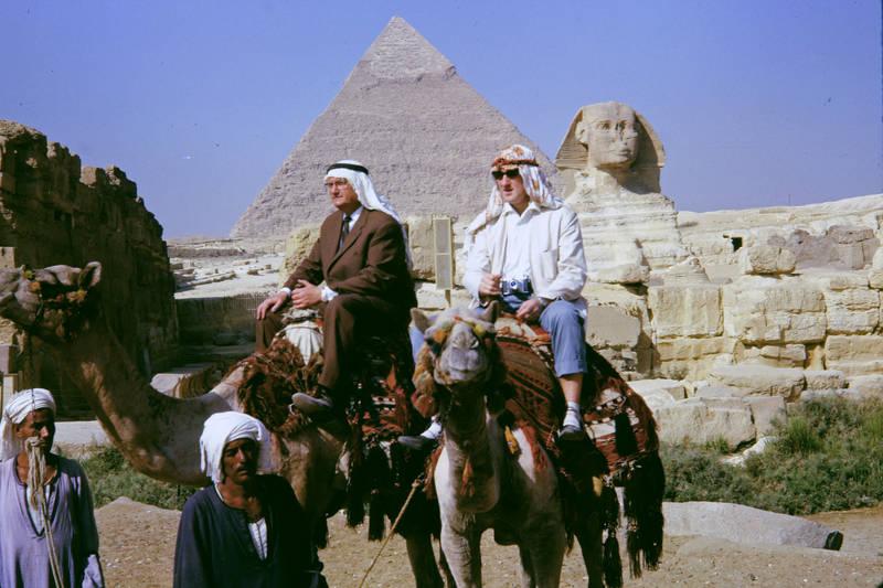 Ägypten, Dromedar, Kairo, mode, reiten, sonnenbrille, sphinx