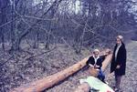 Picknick auf Baumstämmen