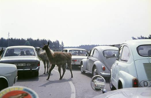 Haarige Verkehrsteilnehmer