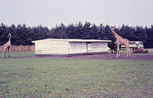 Giraffen-Hütte