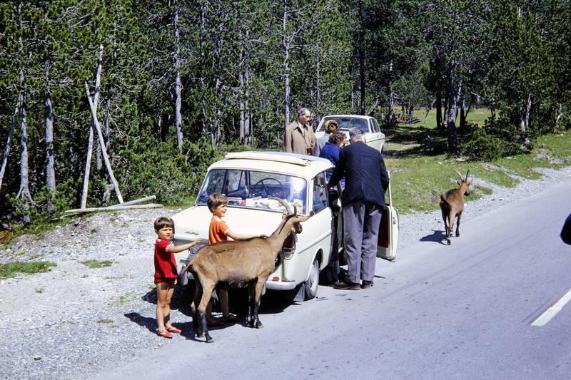 auto, KFZ, Kindheit, mode, PKW, Schweizerischer Nationalpark, urlaub, ziege, ziegenbock