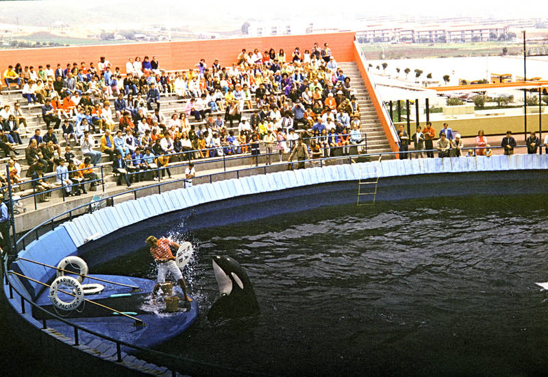 Marineland, Marineland of the Pacific, Orca, orca show, pool, Schwertwal, Sea Show, trainer, Wal, Zuschauer