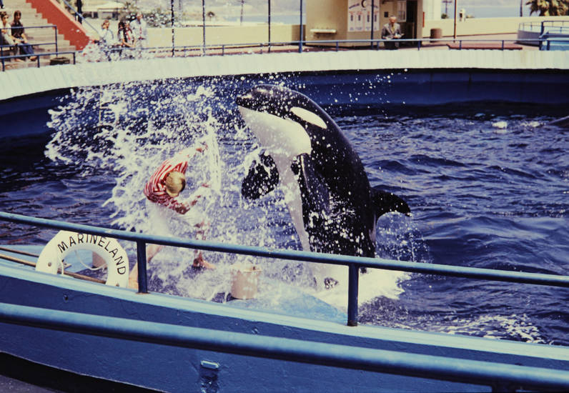 Marineland, Marineland of the Pacific, Orca, pool, Schild, Schwertwal, Schwimmbecken, trainer