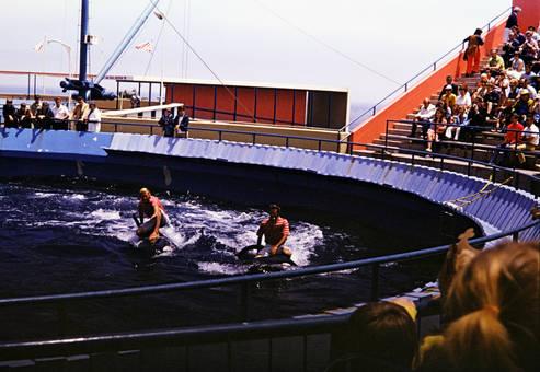 Orca Vorführung
