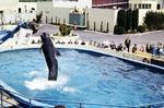 Walfütterung