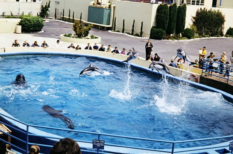Delfin, Marineland, Marineland of the Pacific, Ozeaneum, schwarzdelfin, Wal
