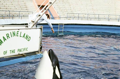 Orca im Marineland