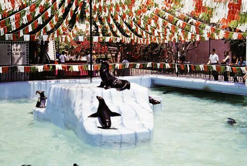 Robben auf Eisblock