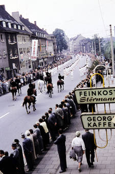 Pferde auf der Straße