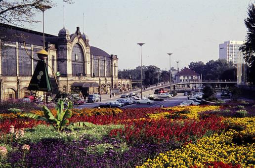 Pflanzen und Blumen