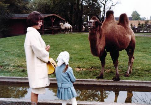 Vor dem Kamel