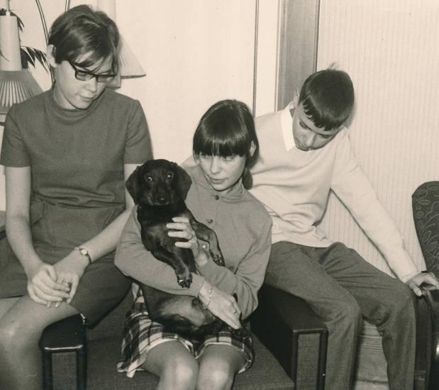 dackel, dackelblick, familie, Geschwister, haustier, hund, mode