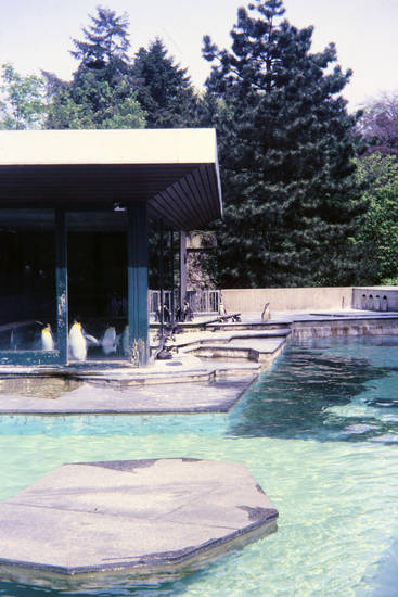Anlage, gehege, pinguin, Wasserbecken, wissenschaftlich, Wuppertaler Zoo, Zoo Wuppertal, Zoologischen Garten der Stadt Wuppertal