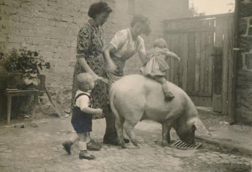Schwein statt Pferd