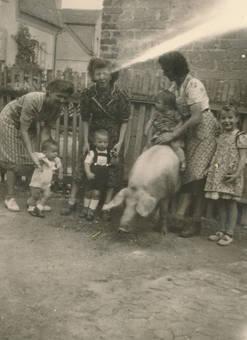 Gruppenbild mit Schwein
