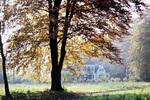 Bayer Baum
