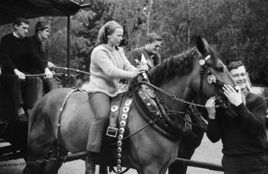 Ausflug mit Pferden