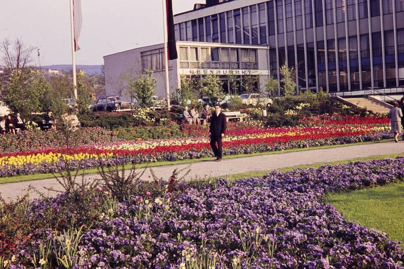 anzug, Blume, Koblenz, park, Rhein-Mosel-Halle