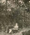 Im Auto durch den Wald